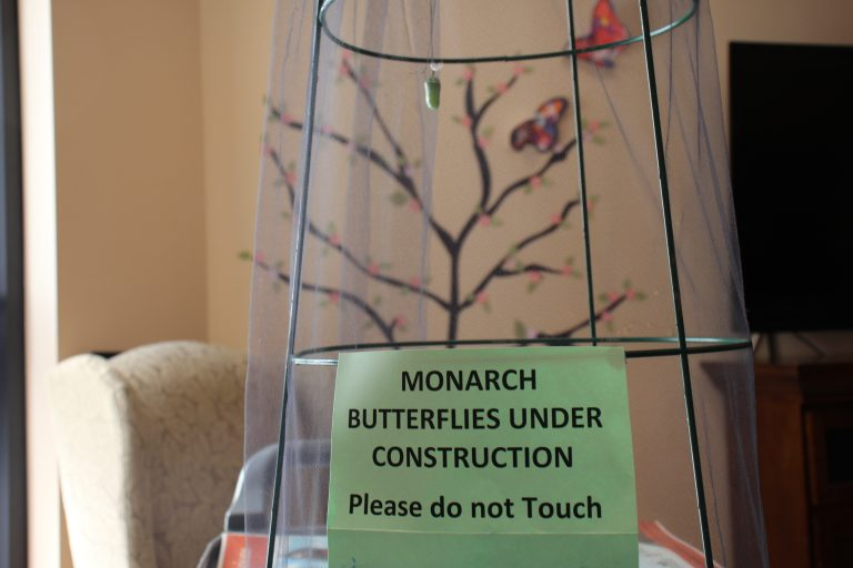 Monarch Butterlies at Salem Home