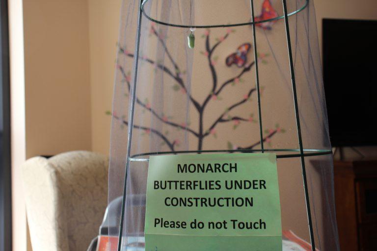 Monarch Butterlies at Salem Home