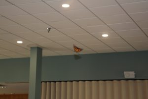 Monarch Butterflies at Salem Home