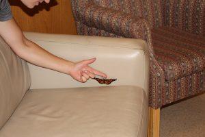 Monarch Butterflies at Salem Home